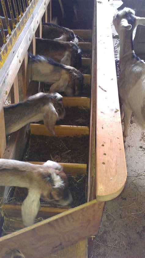 images  goat housing idea  pinterest