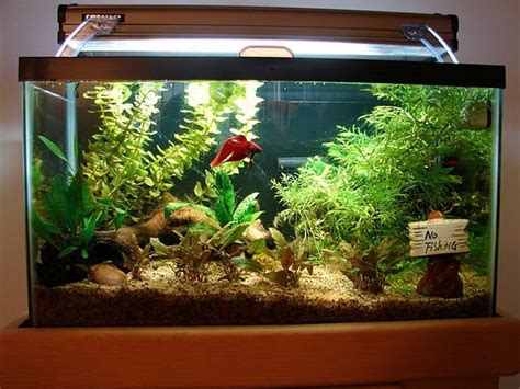 Decorating Ideas For Fish Tank Fish Aquarium Decoration Ideas Aquarium Design Ideas