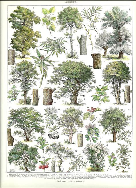 vintage tree vintage trees poster vintage dictionary botanical