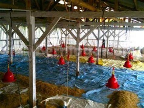 Tirai Kandang Ayam Broiler Tanah Dijual Kandang Ayam Broiler Prospektif
