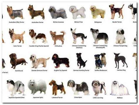 house of dogs different types of small house dogs online pictures reference