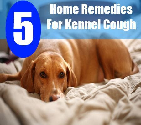 5 home remedies for kennel cough treatments