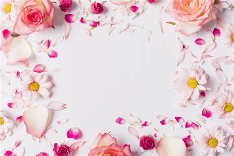 petali e fiori margherita petali foto e vettori gratis