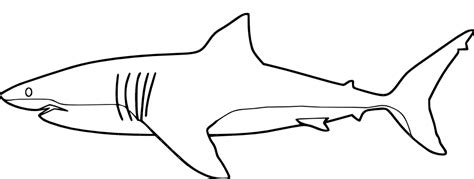 sharks a coloring book books coloring pages shark coloring pages free and printable