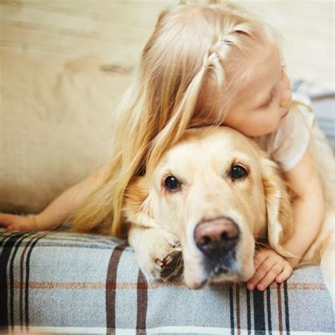 most loving dogs the 10 most affectionate breeds