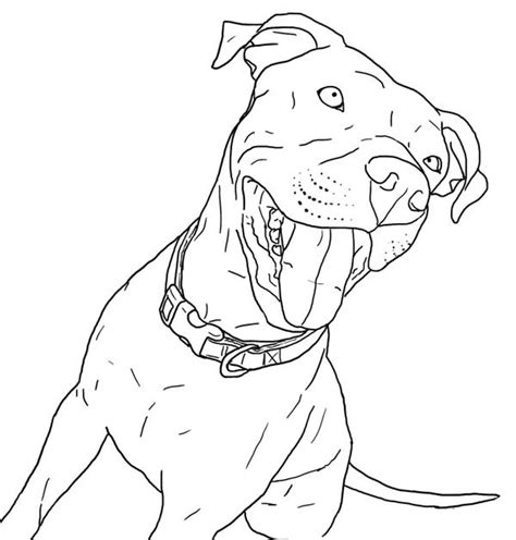 pitbull coloring pages related keywords pitbull coloring
