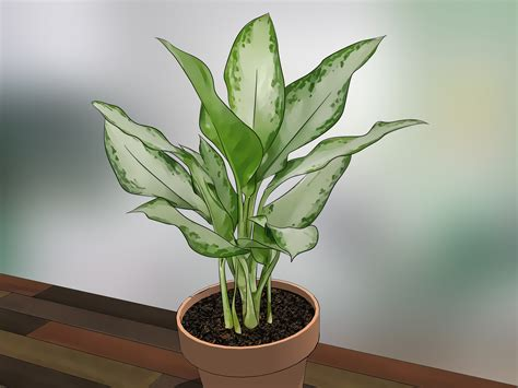 indor plants how to care for indoor plants 15 steps with pictures