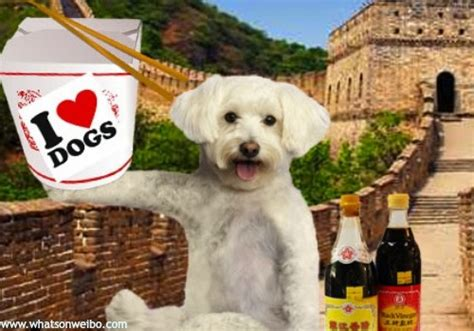 dogs in china 20 facts about dogs in china what s on weibo