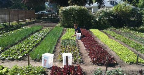 imagenes de jardines urbanos crean un huerto urbano juntando varios jardines de vecinos