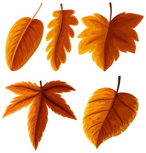 types of orange color different types of leaves in orange color vector premium