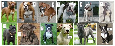 breed bully bully breeds vs insurance companies huffpost