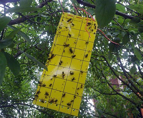 trappole per insetti volanti trituratori insetti e feedback sulla loro applicazione