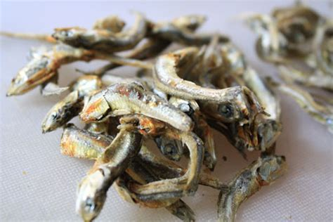 asian anchovy stock  eats