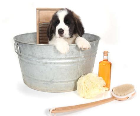 how often should i bathe my puppy giving your puppy a bath the happy puppy site
