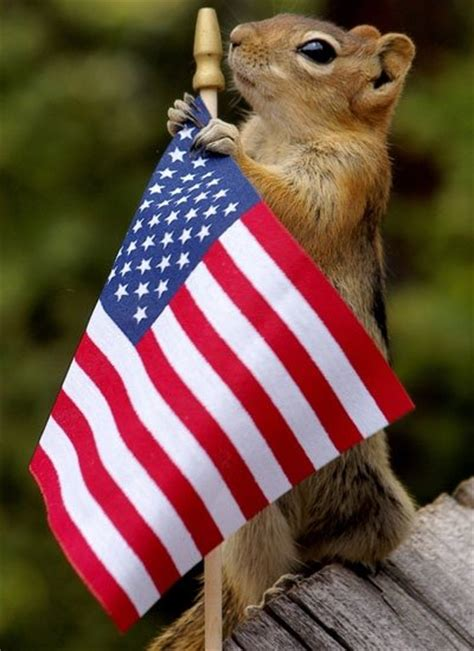 Flags Animals may 01 2015 8 00 pm replied by babygirl51