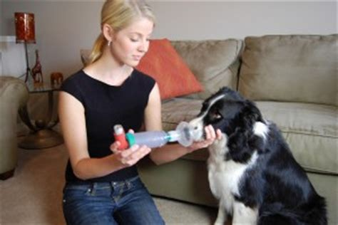 bronchitis in dogs chronic bronchitis in dogs a nagging cough