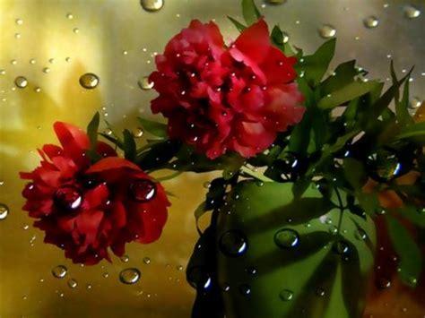fiori fantastici sfondi fiori fantastici per desktop 10544