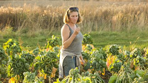 record growing season of mixed value to growers minnesota public radio news