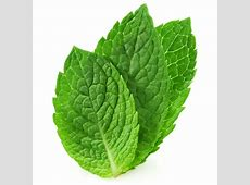 HD Mint Leaves Wallpapers and Photos | HD Food Wallpapers Mint Leaves Wallpaper