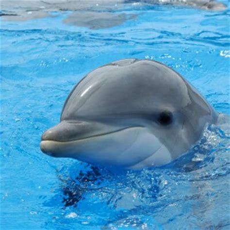 The Dolphin jeff the dolphin jeff thedolphin