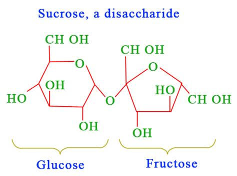 carbohydrates building blocks carbohydrates monomer structure exles chemistry