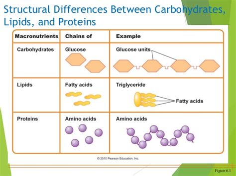 carbohydrates and proteins proteins