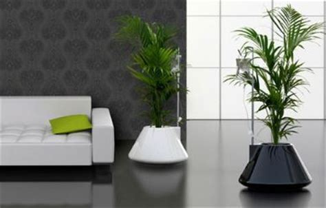 how to use plants in home decor comfree blogcomfree