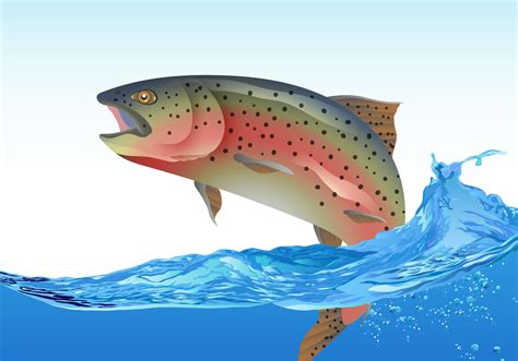 people fly out of boat rainbow trout jumping download free vector art stock