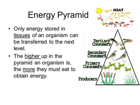 how much energy will be stored in the capacitor interpreting food webs ppt