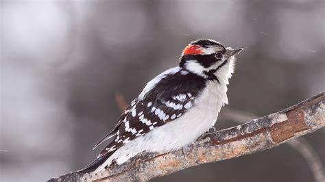 wallpaper bird snow winter plumage white animals