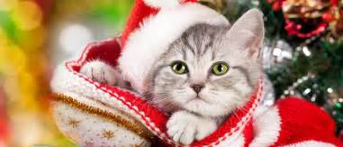 10 christmas gift ideas for cats love that pet