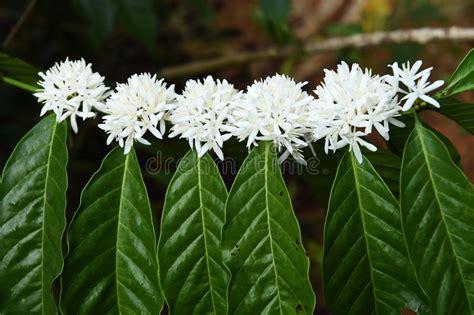 piante da appartamento con fiore pianta verde da appartamento con fiore bianco la scelta