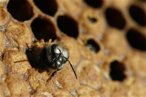 bee reproduction