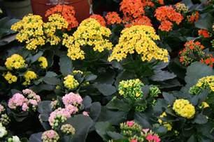 gallery for gt indoor flowers