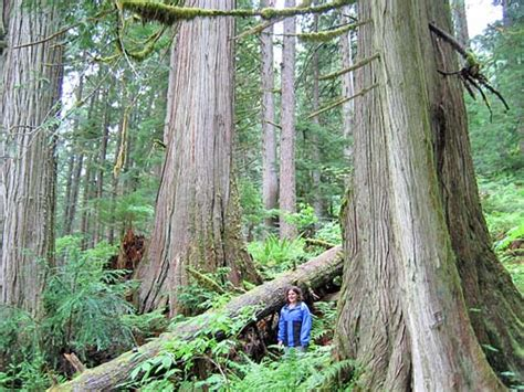 Which Biome Is Logging Hardwood Trees - my introduction to enviromental science temperate