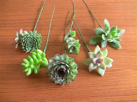 diy succulents diy succulent bouquet wire up succulents with floral tape
