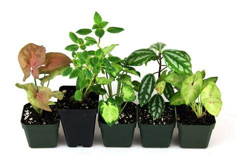 Soil Mix For Container Gardening - terrarium plant bundle 5 plants josh s frogs
