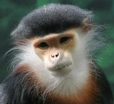 types of monkeys and their funny pictures pets nigeria
