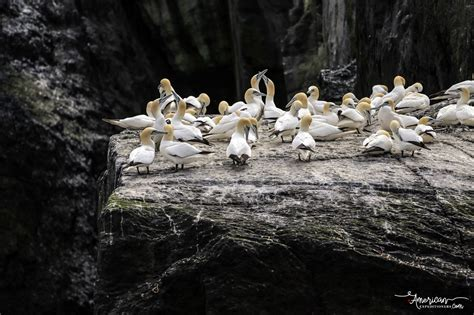 sw boat tours near ta skellig michael ireland s number one attraction it s