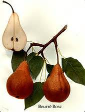 d anjou pear carbohydrates bosc pear
