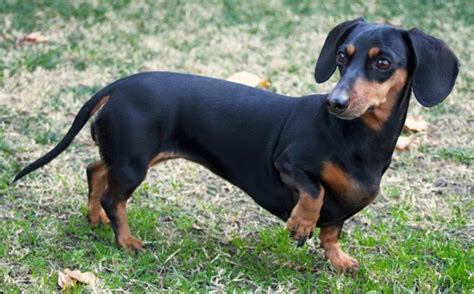 cheapest breeds 20 cheapest breeds which are easy to afford