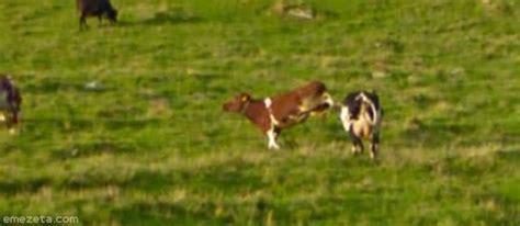 google imagenes vacas 25 momentos 233 picos en google street view emezeta com