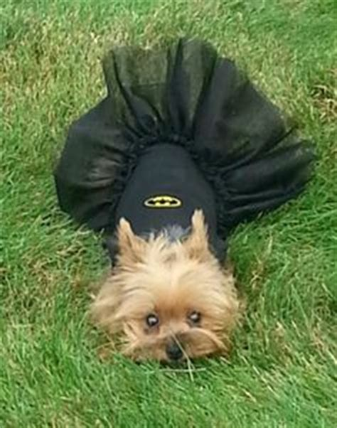 yorkie costume costumes on photo booth yorkie and