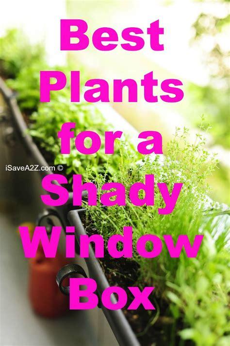 C 0225 Kaos Flowers In best plants for a shady window box http www isavea2z