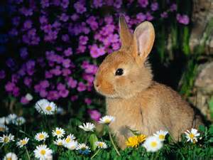 Rabbits In Garden by Bunny Wallpapers Bunny Rabbits Bunnies Wallpaper