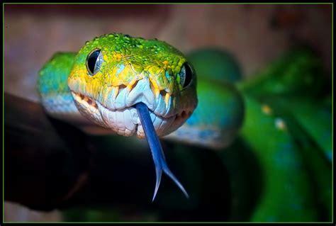 imagenes asombrosas de serpientes las mejores fotos de serpientes haciendofotos com
