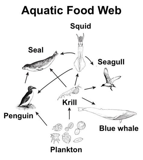 Aquatic Food Web Diagram aquatic food web diagram model engine wiring