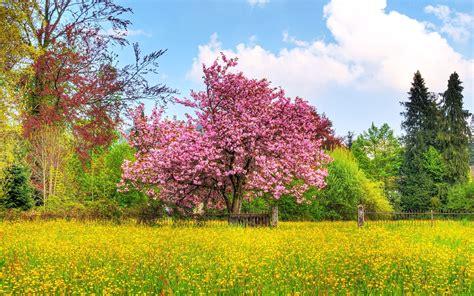 beautiful nature landscape in spring wallpapers and images beautiful spring wallpaper 108591