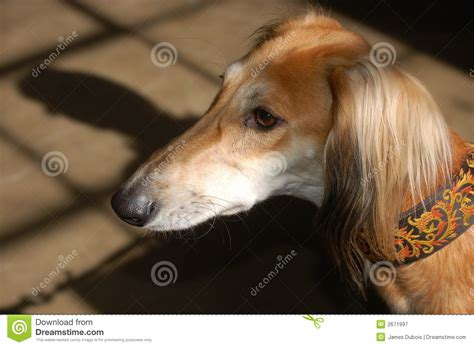 light brown puppy light brown royalty free stock photography image 2671997