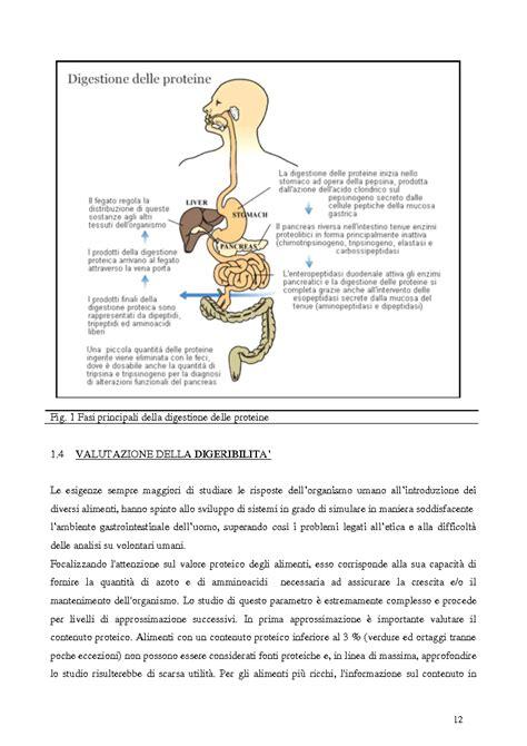 contenuto proteico degli alimenti focalizzando l attenzione sul valore proteico degli alimenti